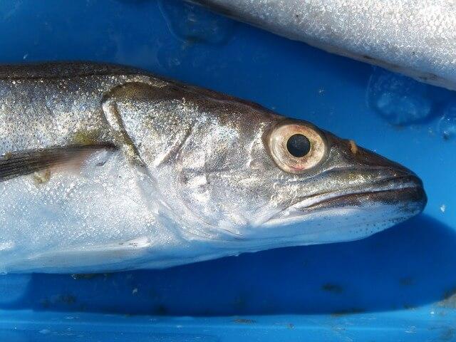 Выбор свежей рыбы