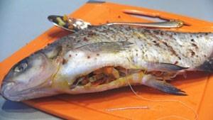как зашить брюшко рыбы