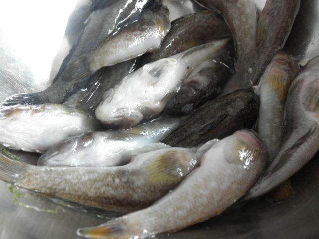 Свежая рыба - бычки