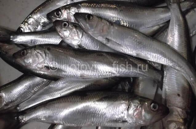Живая рыба для обработки