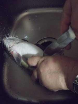 Надрез брюшка рыбы